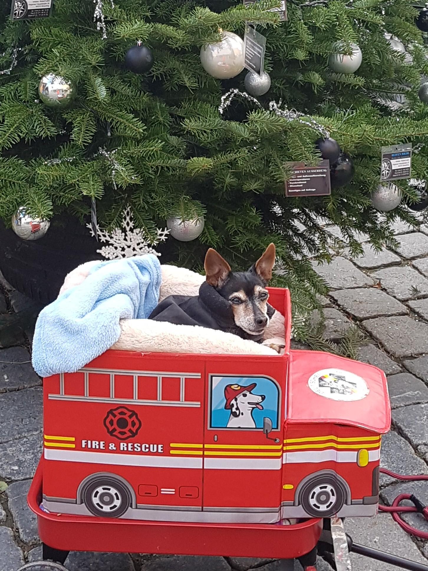 """Unsere """"Geheimwaffe"""" Nelly macht es sich in ihrem Feuerwehrauto richtig gemütlich!"""